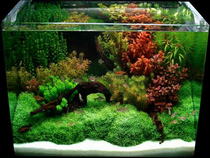 Cool Aquarium Decorations with grass design Raw Material Suppliers